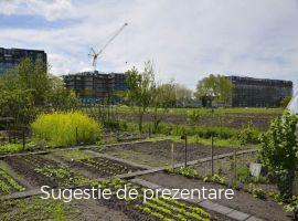 Vanzare  terenuri constructii  489 mp Ilfov, Teghes  - 4500 EURO
