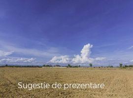 Vanzare  terenuri agricol  70 ha Tulcea, Mihail Kogalniceanu  - 49900 EURO