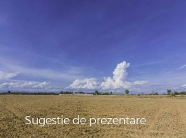Vanzare  terenuri agricol  50 ha Timis, Cenad  - 10500 EURO