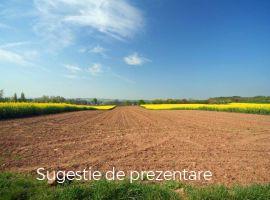 Vanzare  terenuri agricol  8400 mp Iasi, Vorovesti  - 55000 EURO