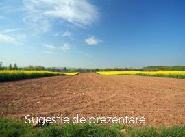 Vanzare  terenuri agricol  100 ha Timis, Sanandrei  - 600000 EURO
