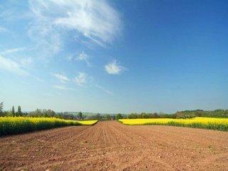 Vanzare  terenuri agricol  16 ha Arad, Barzesti  - 8000 EURO