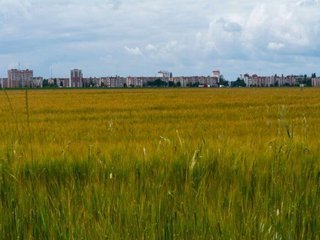 Vanzare  terenuri agricol  30 ha Bacau, Bacau  - 8400 EURO